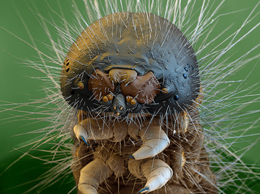 15-Incredible-Images-of-Bugs-Up-Close